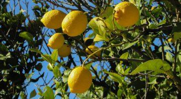 Derivados Esenciales de Limón S.A.